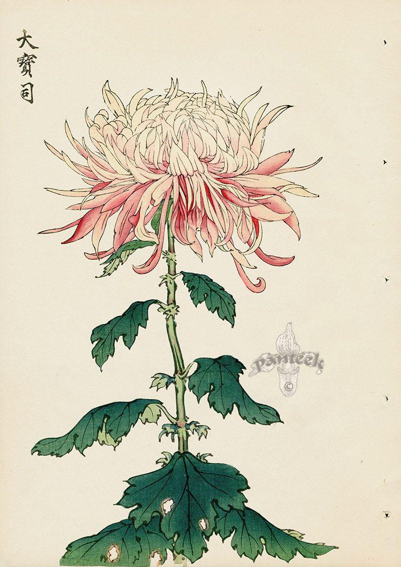 Chrysanthemum Flowers By Keika Hasegawa Chrysanthemum Japanese Flowers Gardens Art Antiqueprints Japanese Art Japanese Woodblock Printing Art