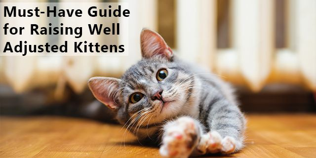 Must Have Guide For Raising Well Adjusted Kittens Cat Behavior Cat Facts Cat Stretching