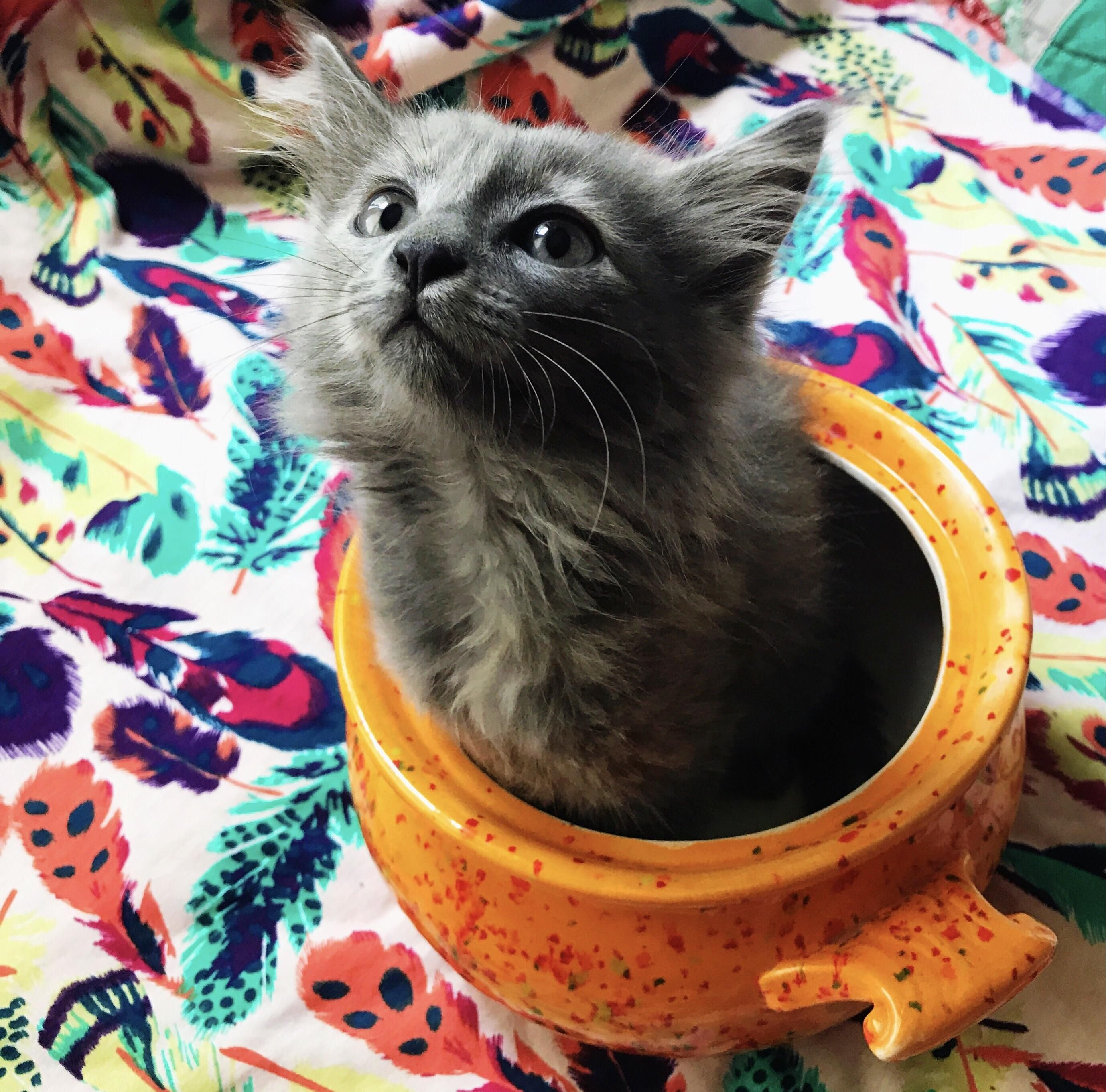 Reddit meet my new kitty Pippi http//ift.tt/2rDq0Um