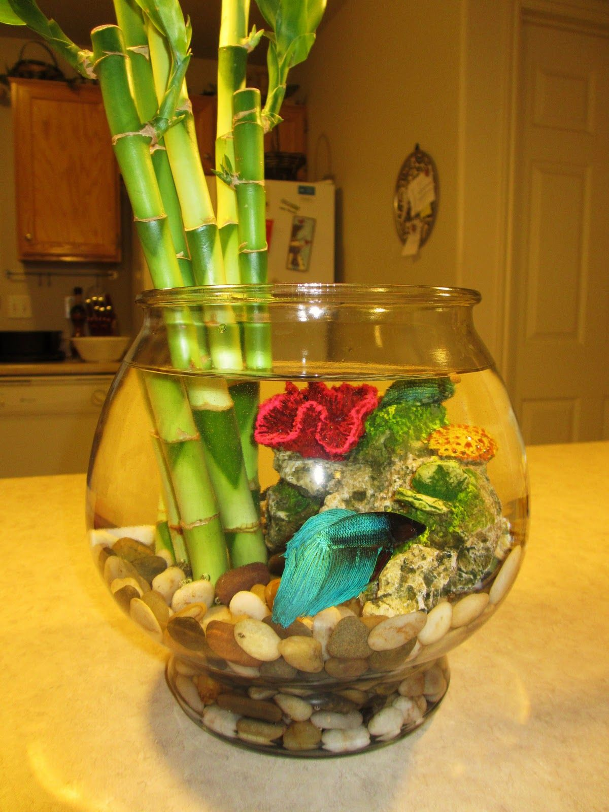 I love this idea i love bamboo and had a plant all for Betta fish bowl ideas