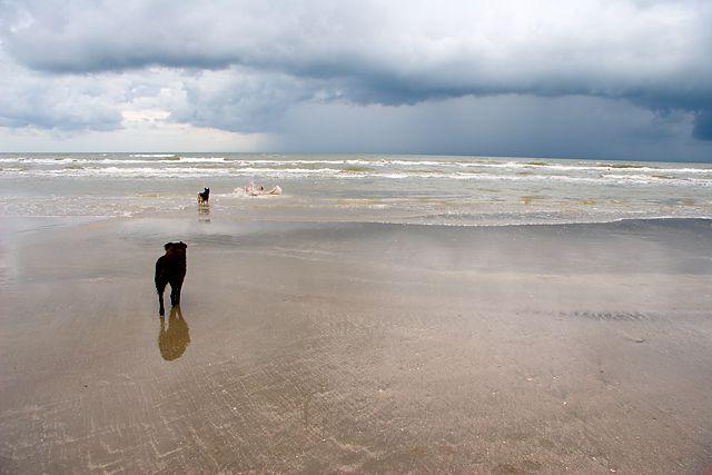 Jamaica Beach Herman Casey Galveston Texas Pinterest
