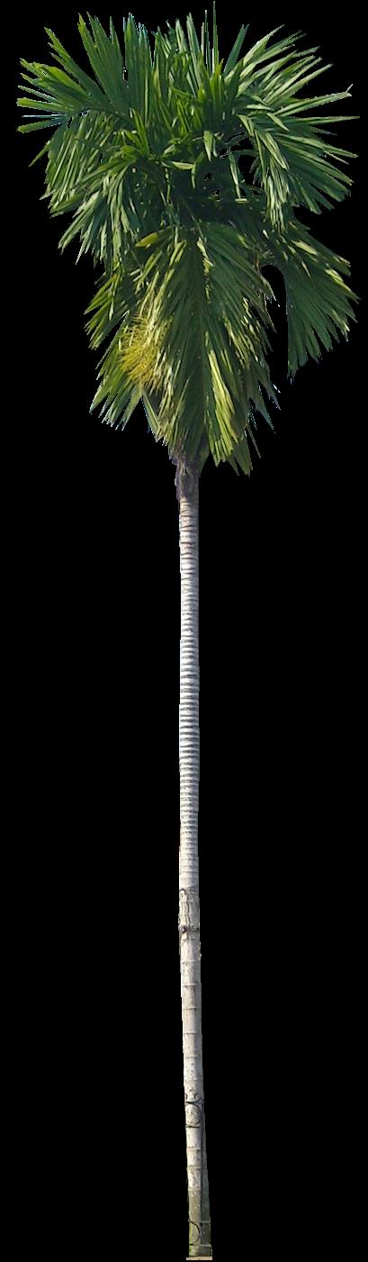 Pin De Uriel Pineda En árboles Arboles Png Vegetacion Y Png