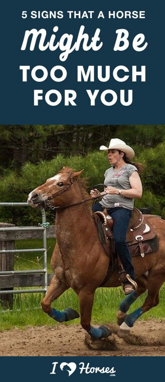 It doesn't matter if you're a beginner horseback rider or if you've been in…