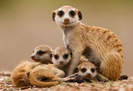 Free Screensavers For Windows 7 Autralia Releases New Windows 7 Wildlife Screensaver Making Windows Cute Animals Images Cute Baby Animals Cute Animals