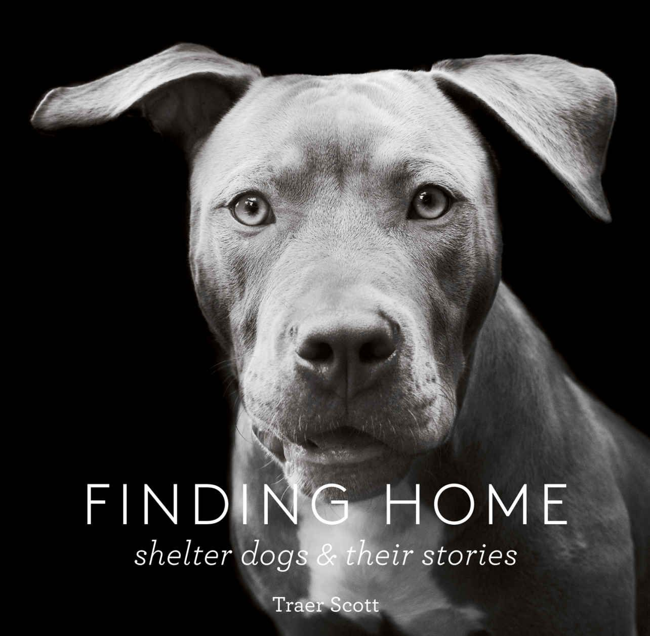 Finding Home Shelter Dogs And Their Stories By Traer Scott Shelter Dogs Home Shelter Rescue Dogs