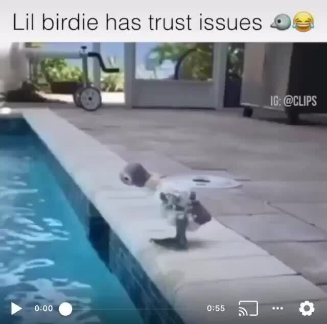Lil birdie has trust issues Oca - iFunny :)
