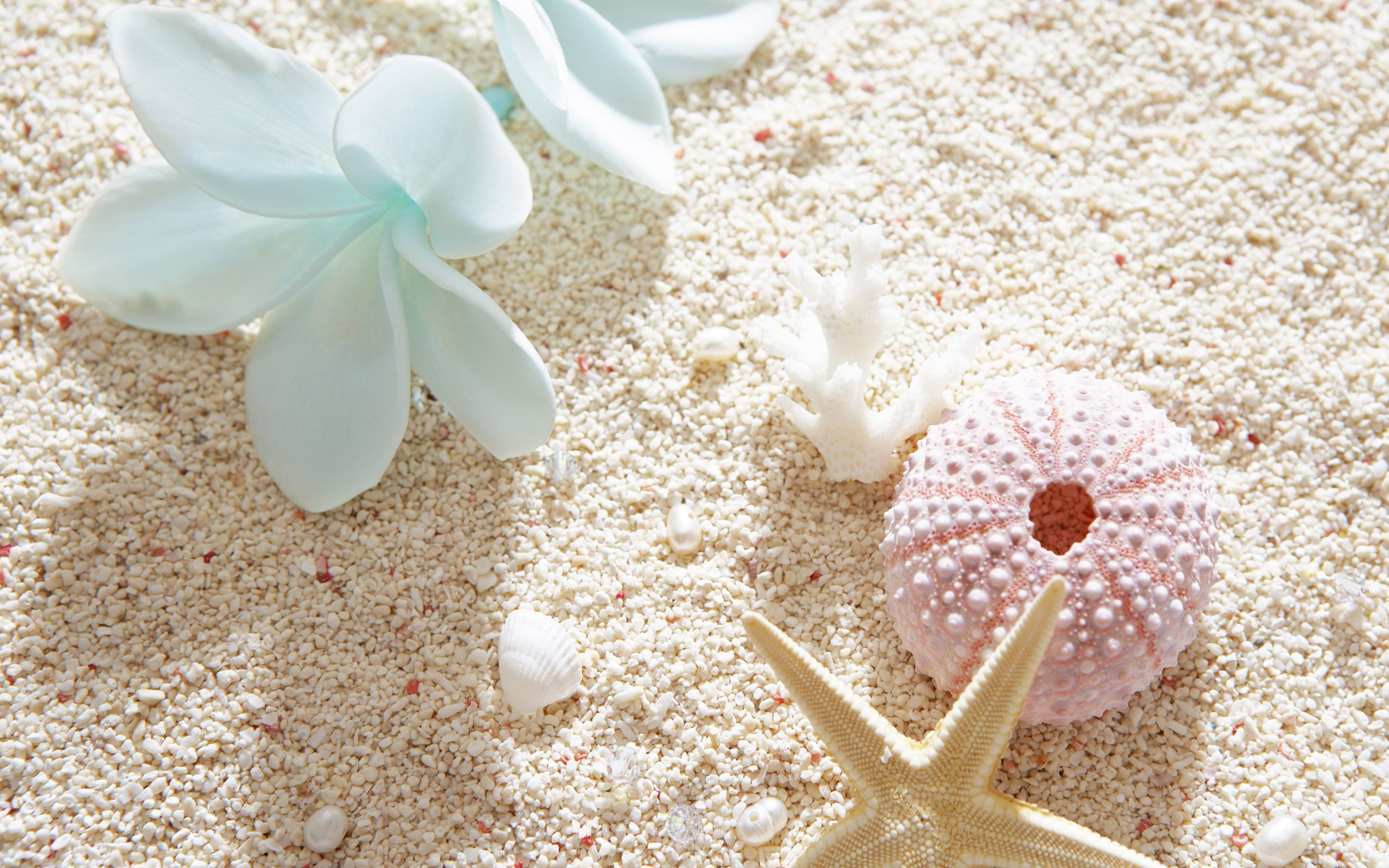 beach seashells pictures – images and photos download 7069