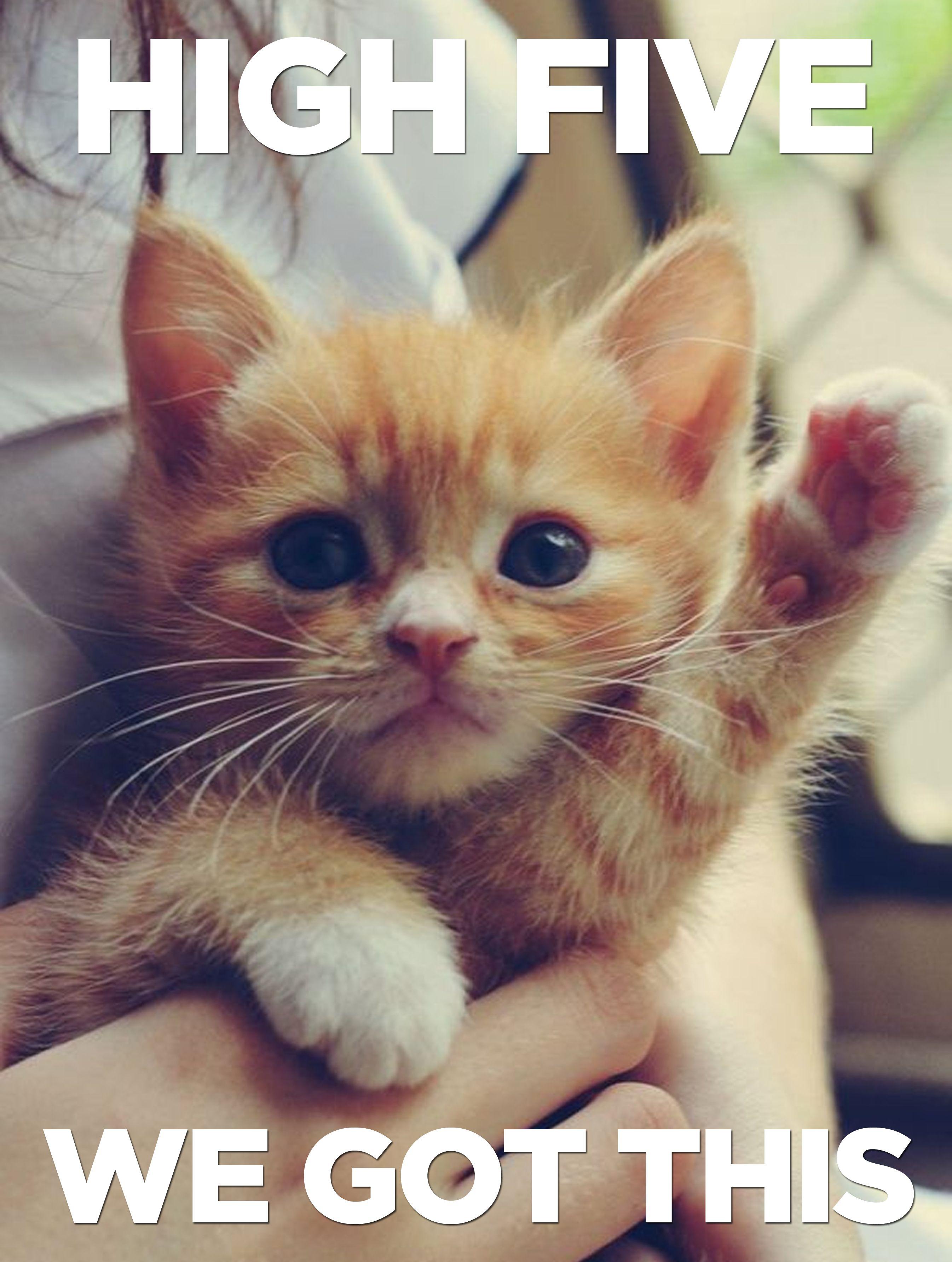 Exam motivation/emergency kitten break | Cute animals ...