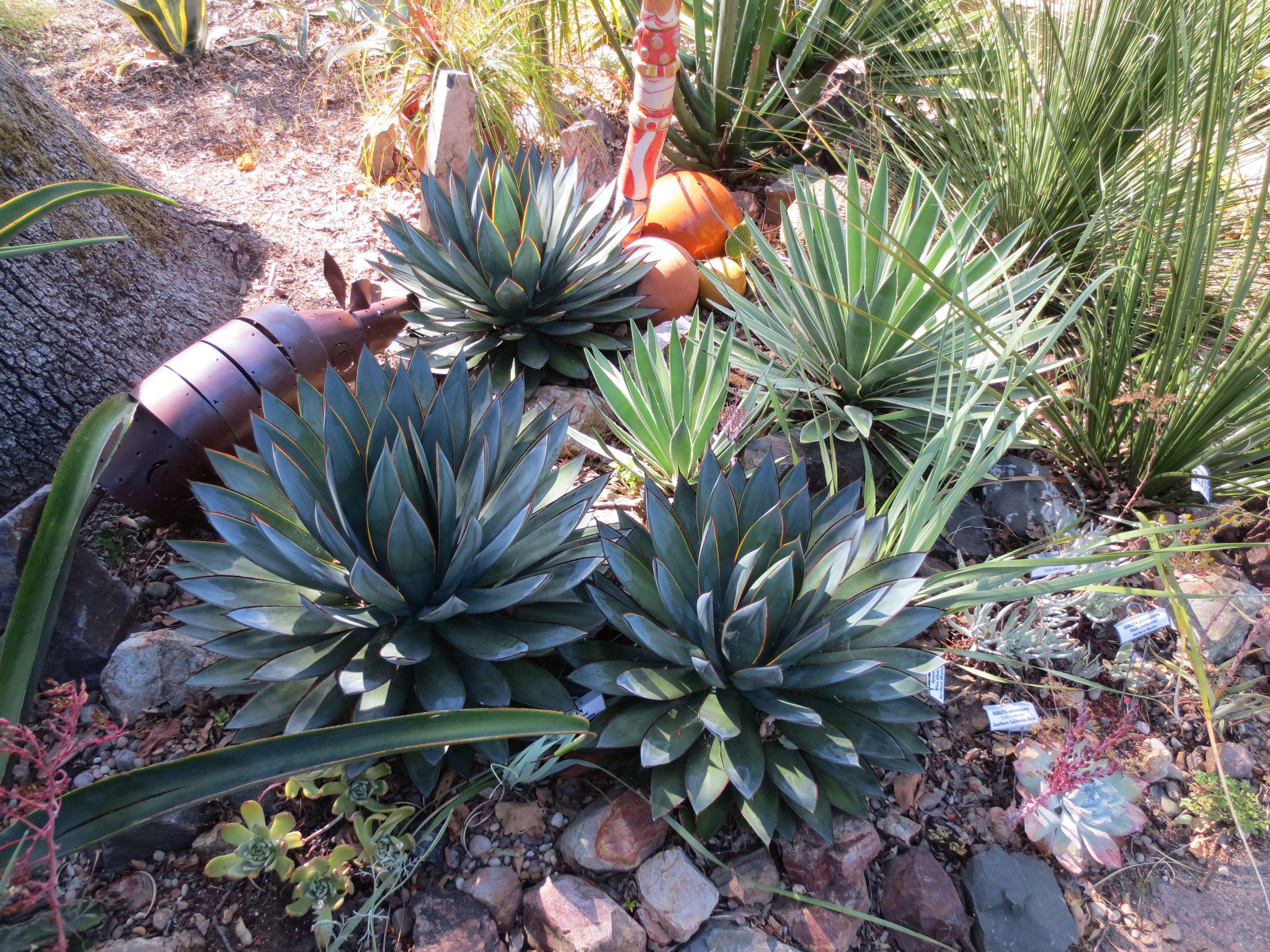 Superior Succulent Garden