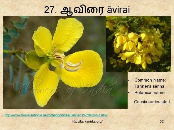 27 ஆவ ர Avirai Flower Names Botanist Flowers