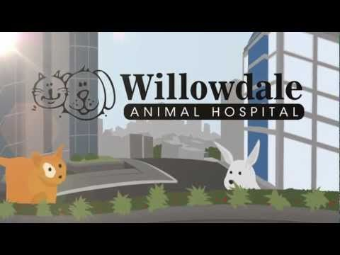 Willowdale 24 Hour Emergency Animal Hospital Toronto Veterinary Clinics North Toronto Animals Clinic