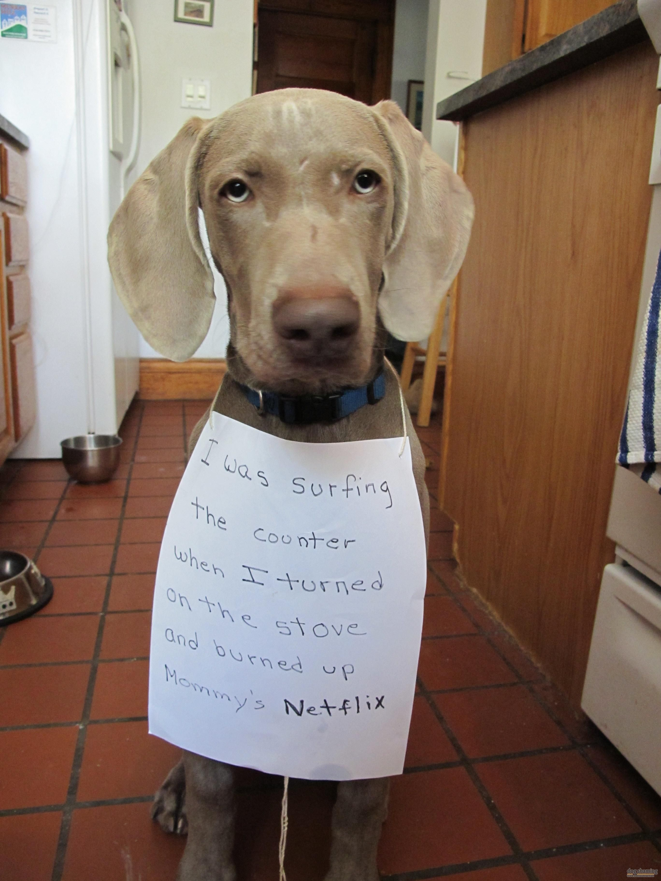 Ummm What S Your Return Policy Dog Shaming Dog Shaming Funny
