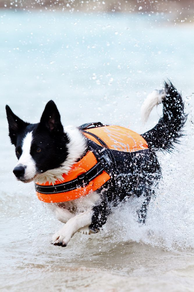 Hurtta Life Jacket For use in swimming, water rescue