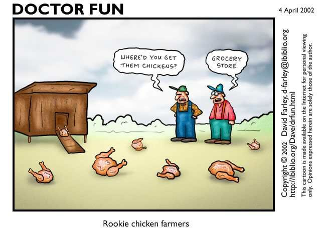 Jokes About Chickens: Chicken Cartoons - Google Search
