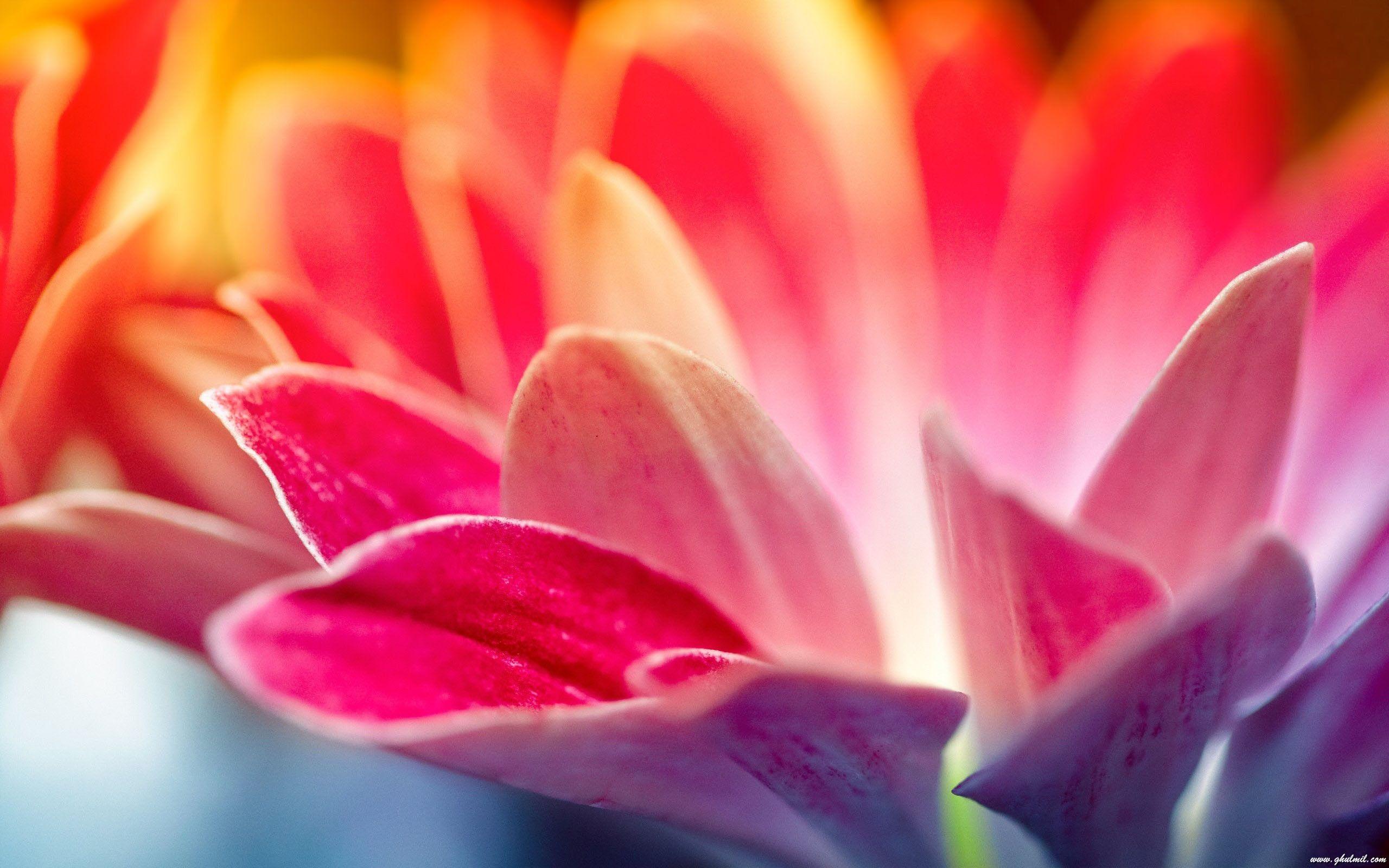 Pin By Lorie Stone On Flowers Flower Desktop Wallpaper Hd Flower Wallpaper Flower Wallpaper