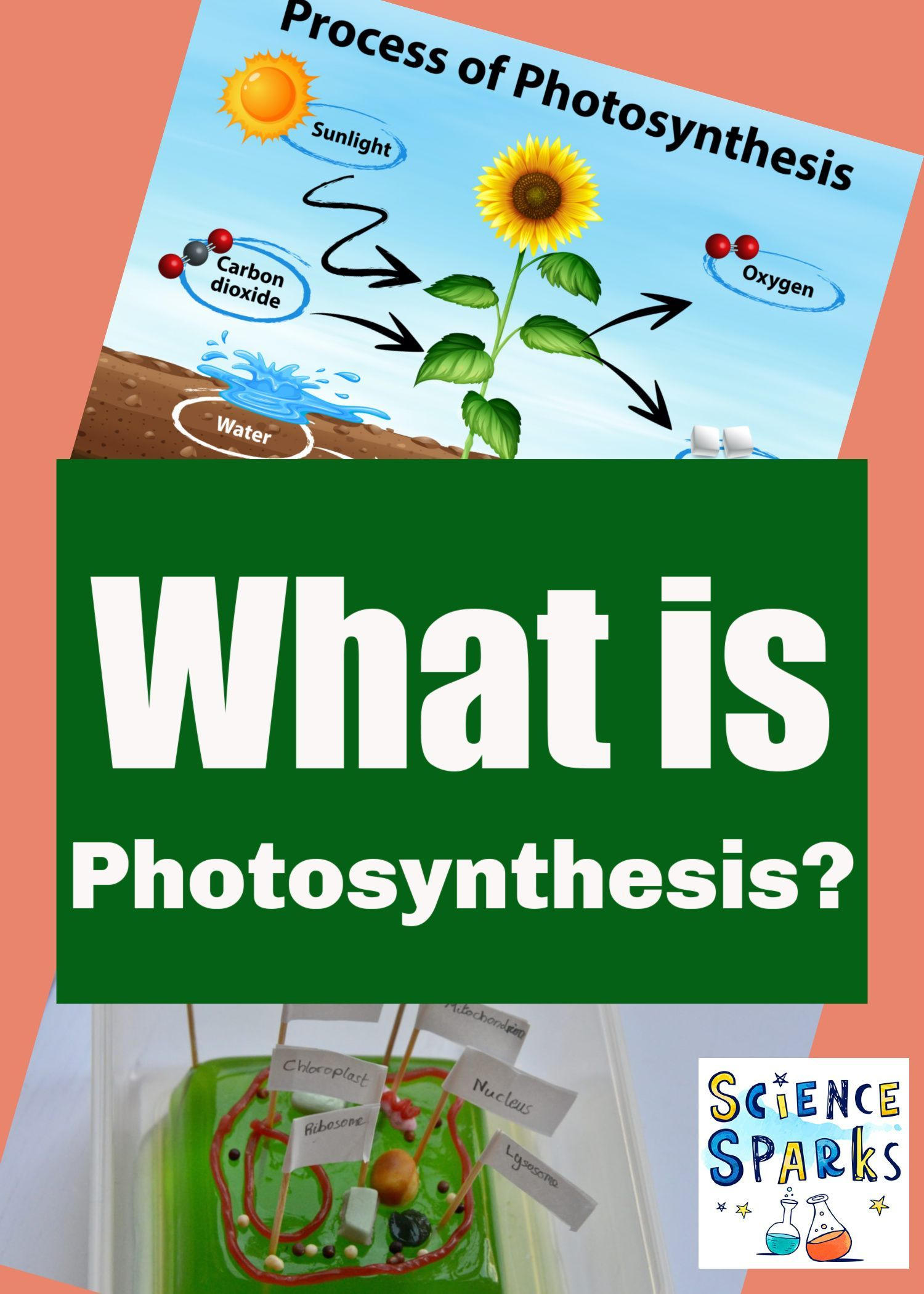 What Is Photosynthesis In 2020 Plants Science Experiments Photosynthesis Plants Science Activities