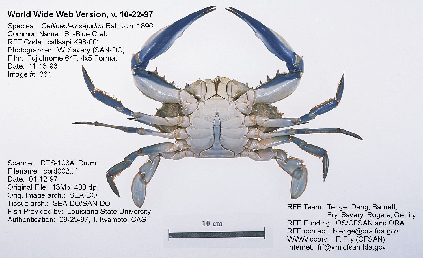 crab\'s claw anatomy - Пошук Google | Moneymakers | Pinterest