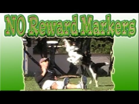 Dogs Training No Reward Markers Errorless Learning Www
