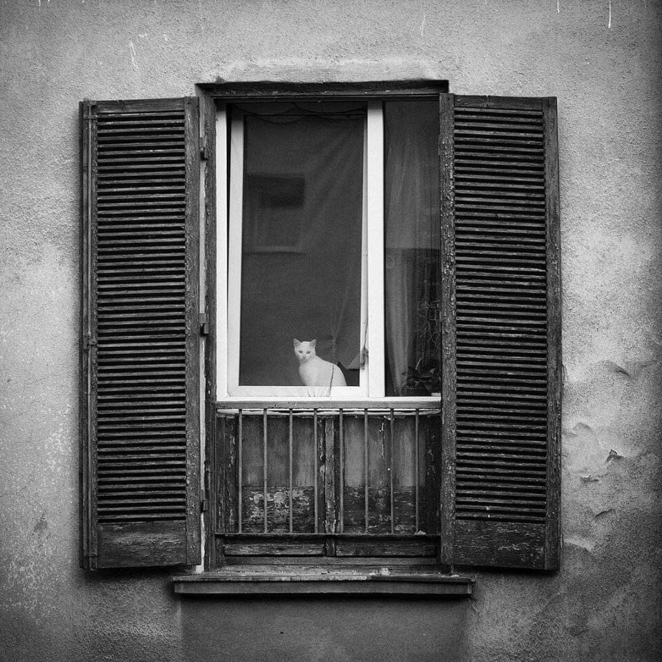 """Simple is Beautiful on Instagram: """"photo by Claudia Gregor #claudiagregor #cat #architecture #simpleisbeautifulphotography #photography #art #fineart #photographyart…"""""""