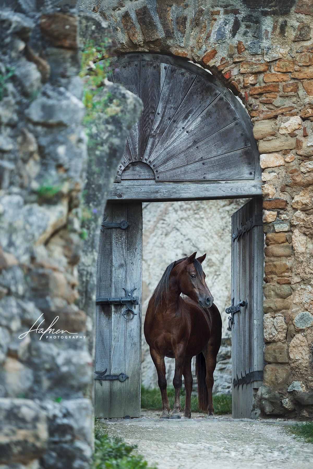 Welsh Pony Stute steht im Türrahmen einer alten Ruine | Pferd ...