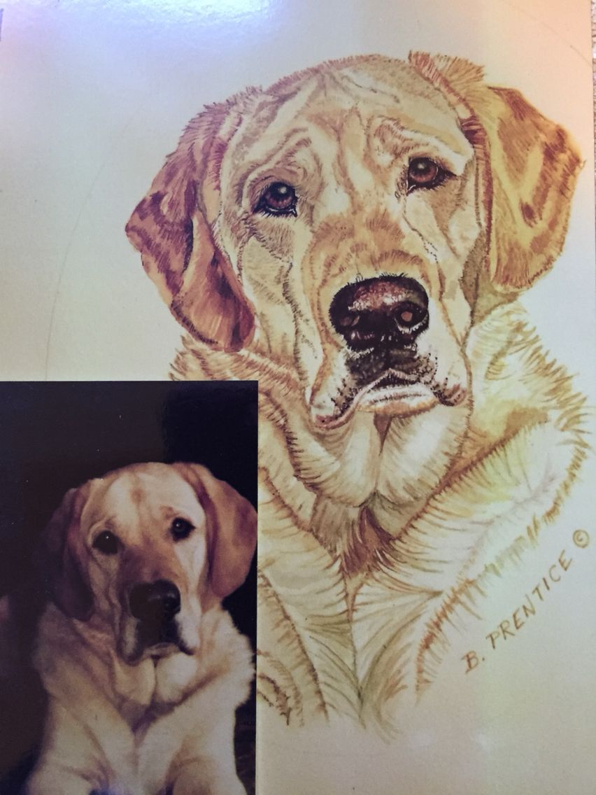 Watercolor  painting from your pets photo