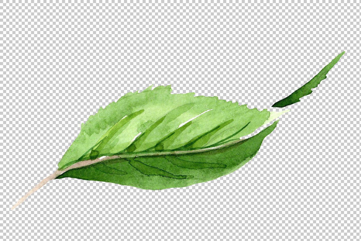 Tea Leaf Png Watercolor Set By Mystocks Thehungryjpeg Com Png Aff Leaf Tea Watercolor Adver Floral Botanical Plant Leaves Leaves