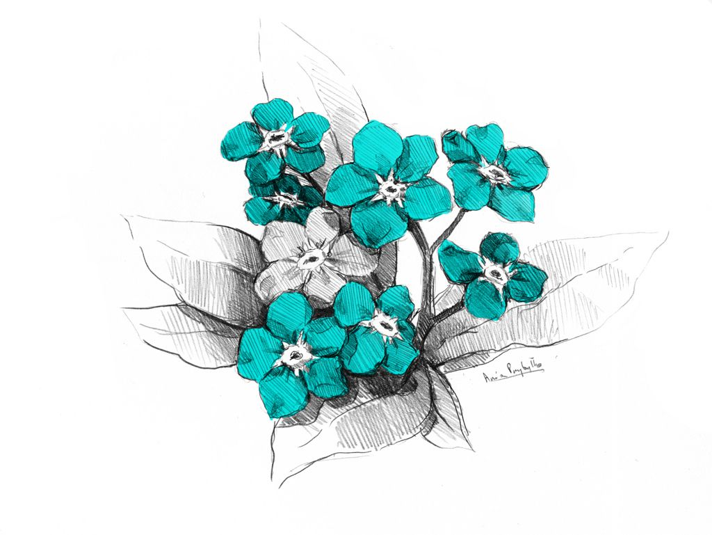 forget-me-not by Ania Przybyłko | We Heart It