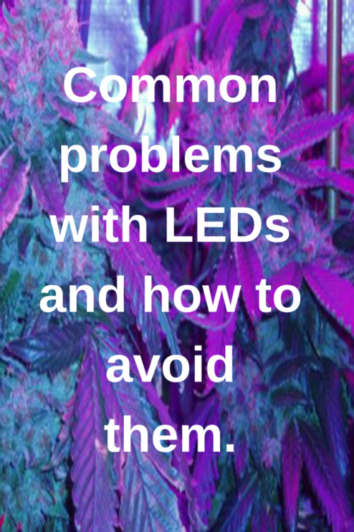 b405a6296 organicindica  Common problems with LEDs and how to avoid them. Weed  Plants