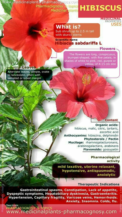 Pin By Imran Malik On Helth With Images Hibiscus Herbal Medicine Medicinal Plants