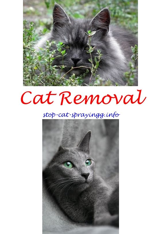 stop cat from peeing on rug | Furniture Shop