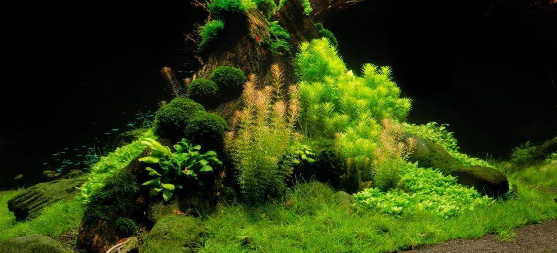 The Green Machine Aquascaping Shop, Aquarium Plants U0026 Supplies, Planted  Tank Videos, Tutorials