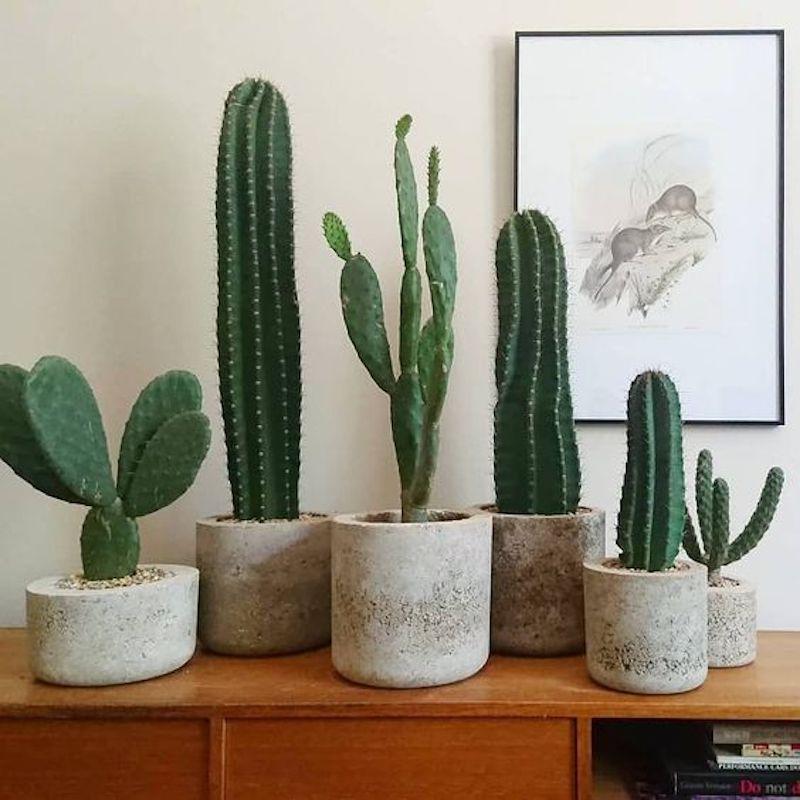 #green #cacti #succulent
