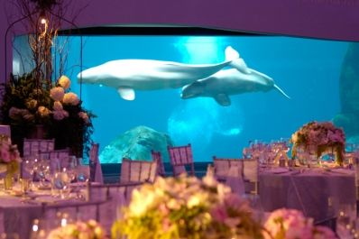 An Ocean Themed Wedding By Wolfgang Puck Catering At The Georgia Aquarium