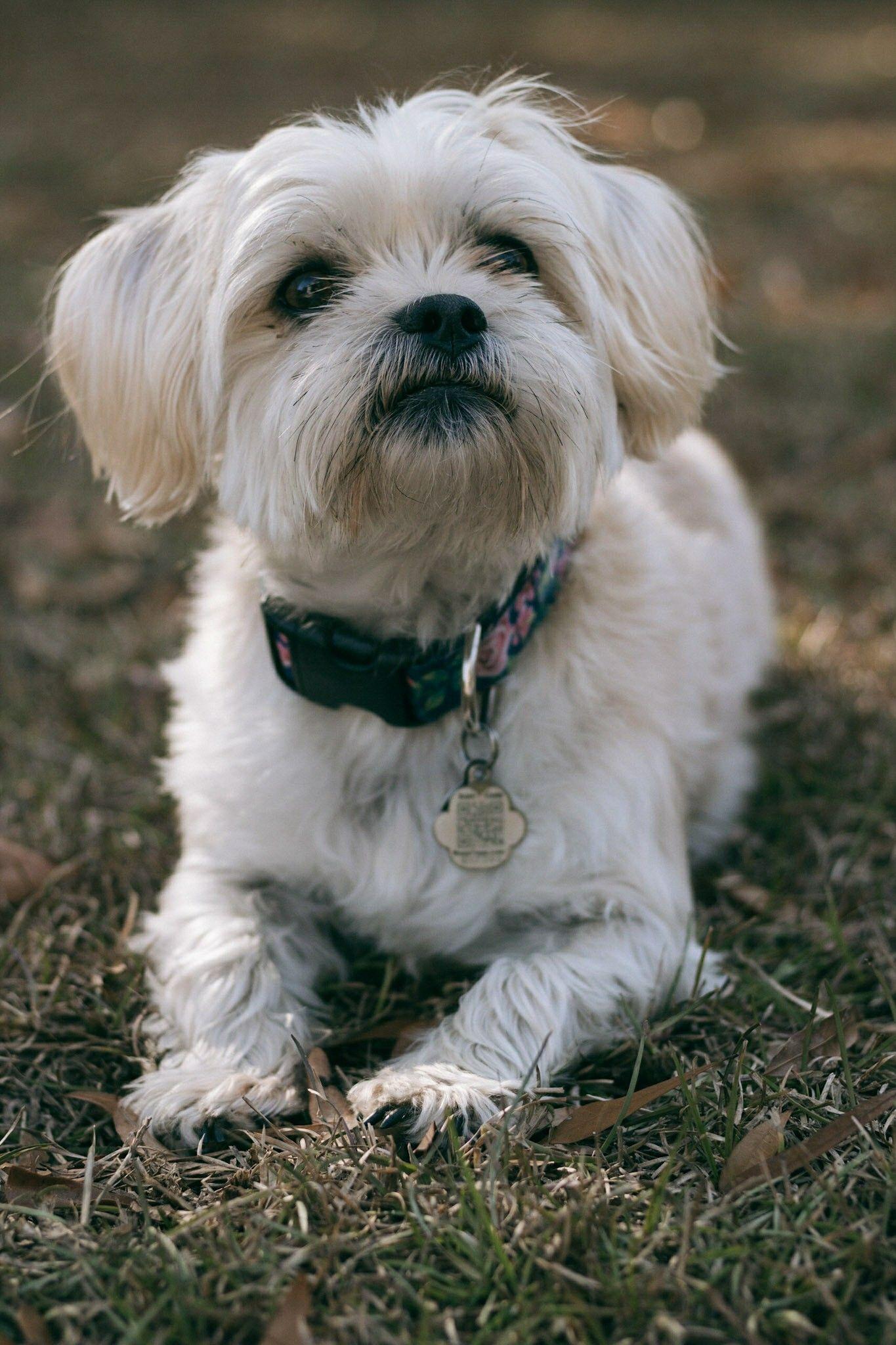 The Perfect day + North Carolina Life update Dog