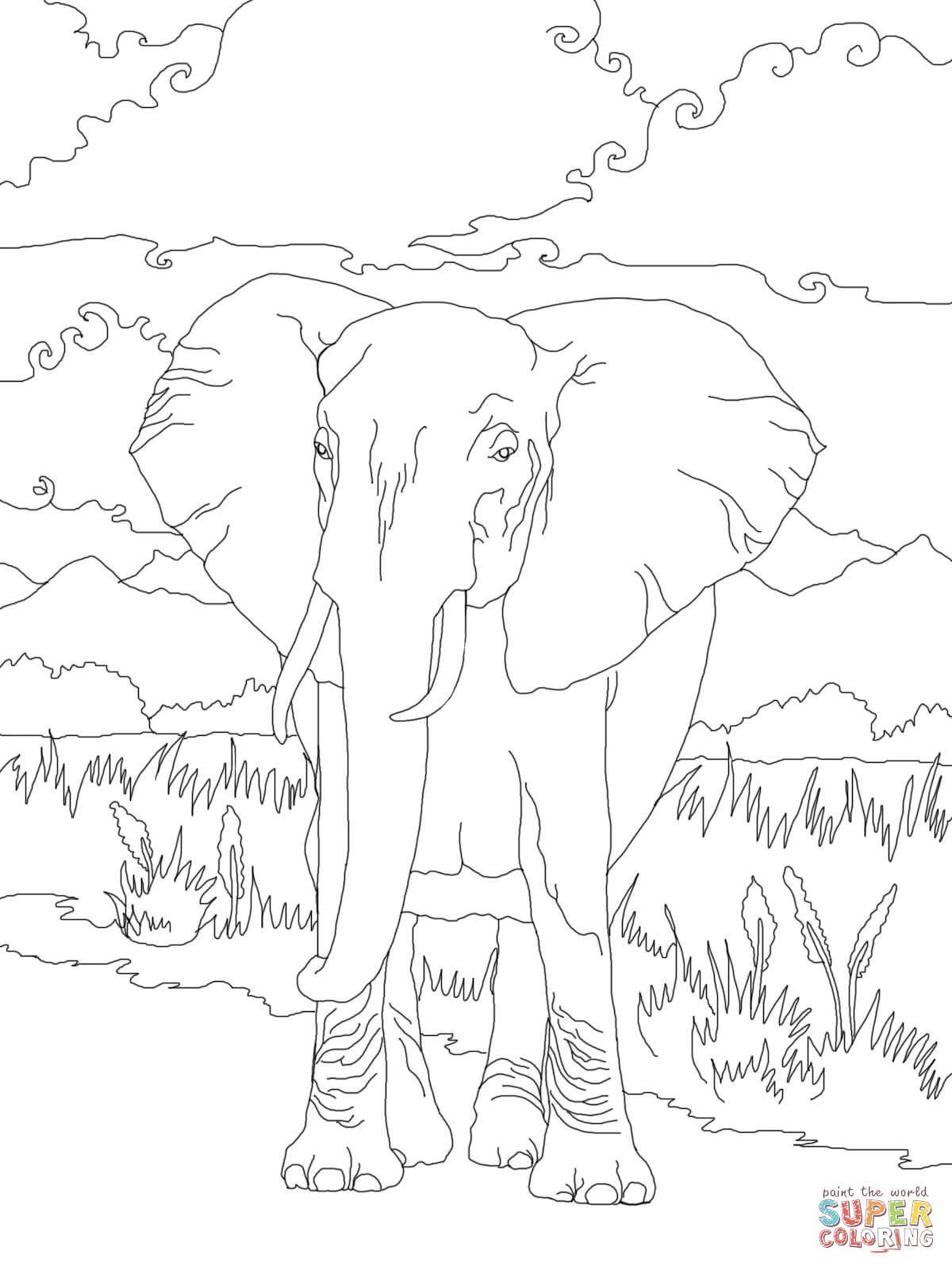 Elefante Africano de Sabana | Super Coloring | animales | Pinterest ...