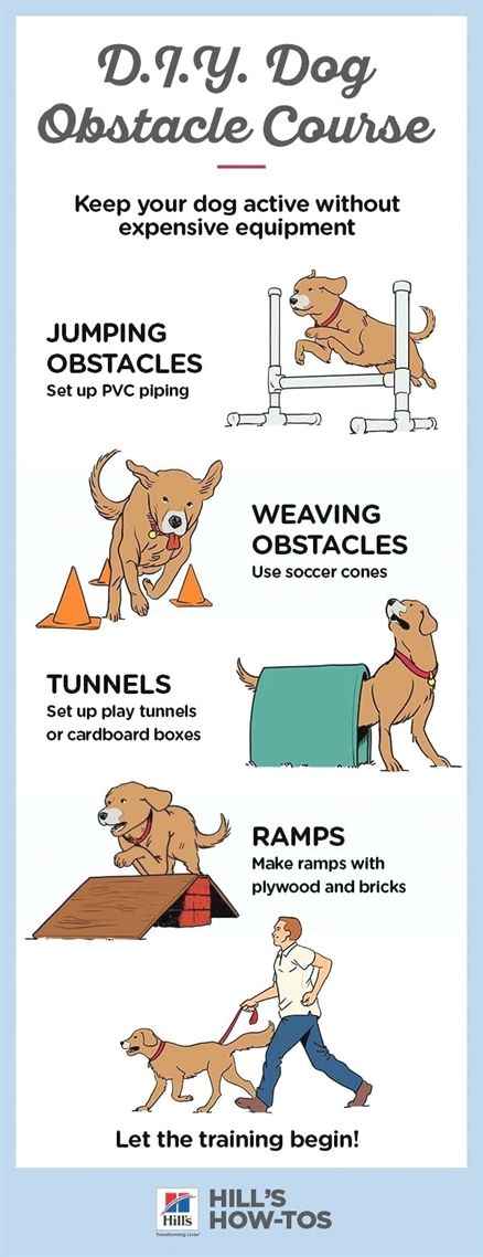 In Training Dog Vest Teamworks Dog Training Raleigh Nc How To