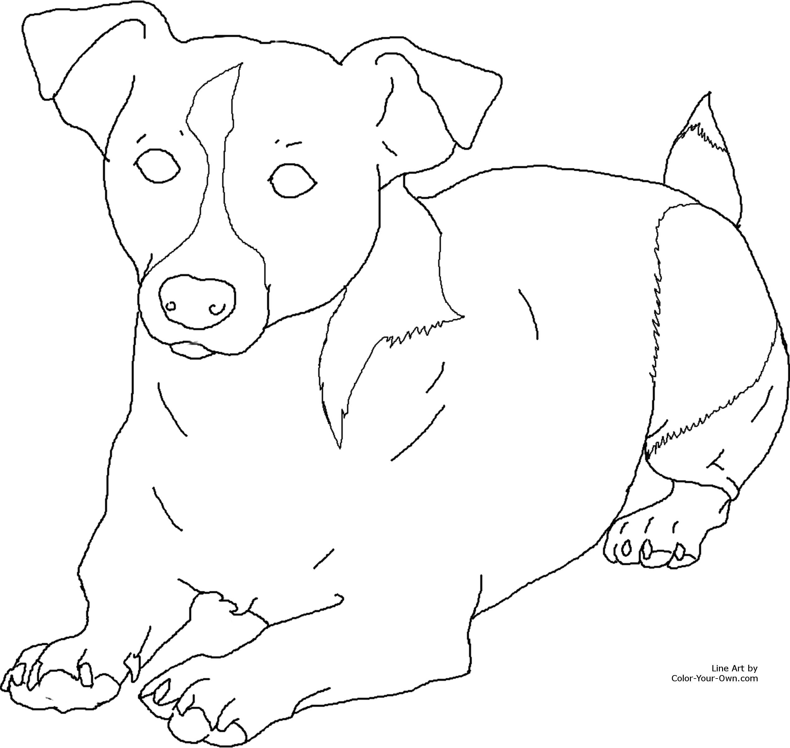 Image Result For Coloring Pages Jack Russell Puppy S
