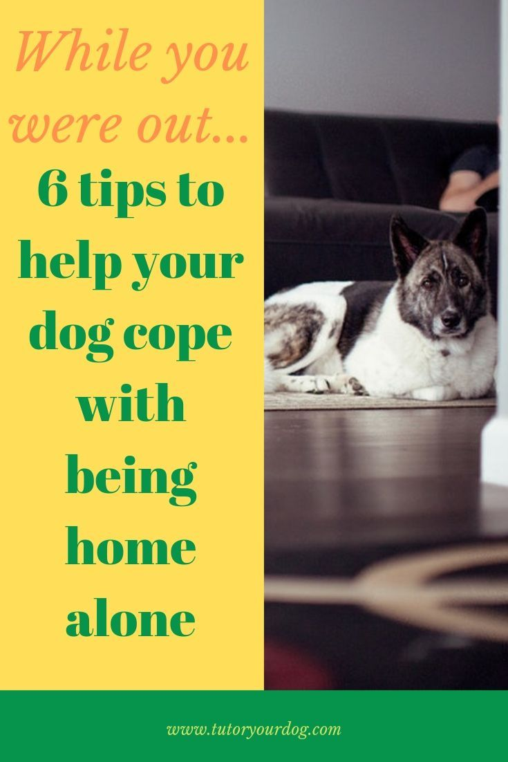 While You Are Out 6 Tips For Leaving Your Dog Home Alone Tutor