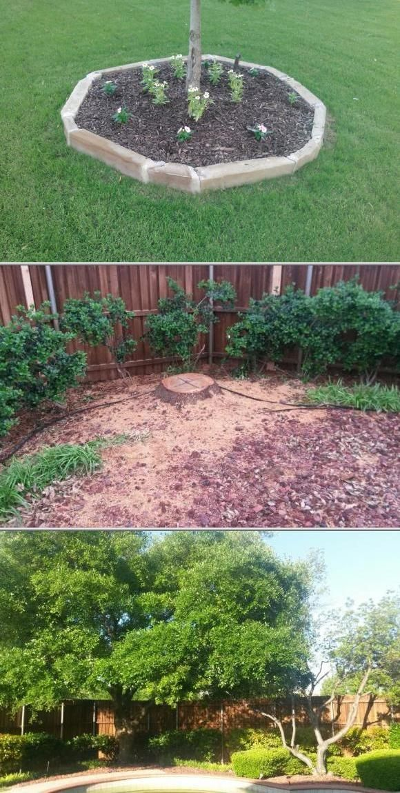 Lawn Care Tree Services Lawn Care Sod Installation Lawn