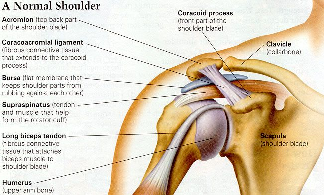 coracoacromial ligament - بحث Google | medicine | Pinterest