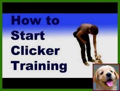 House Training A Blind Puppy And Dog Training Classes Columbus