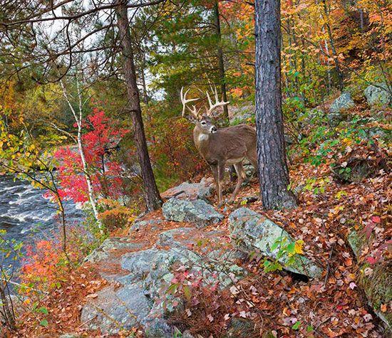 Deer Banning State Park Mural Craig Blacklock Murals Your Way