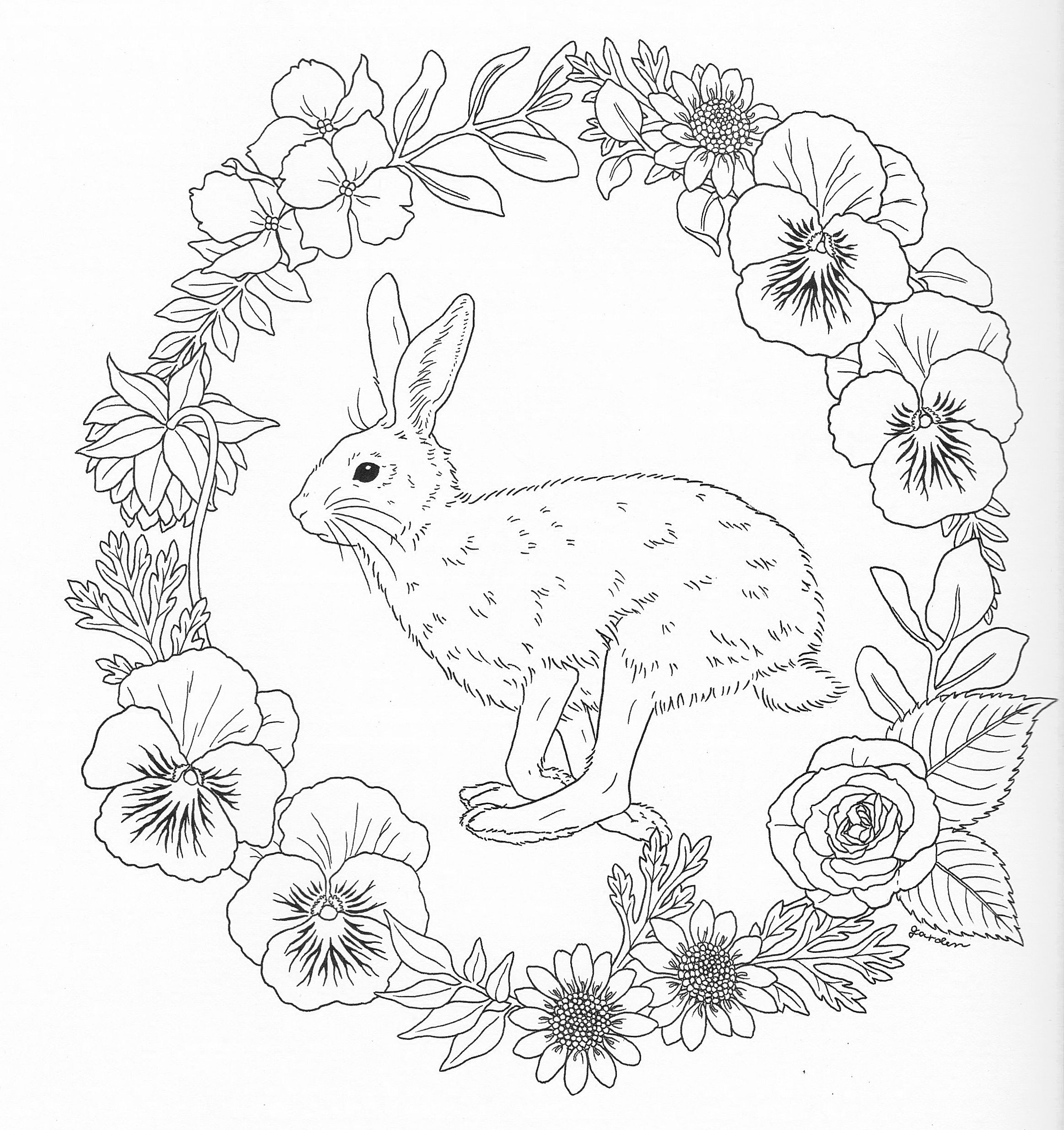 harmony of nature coloring book pg 39 color pages