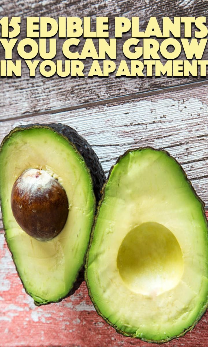 15 Edible Plants You Can Grow In Your Tiny Apartment 400 x 300