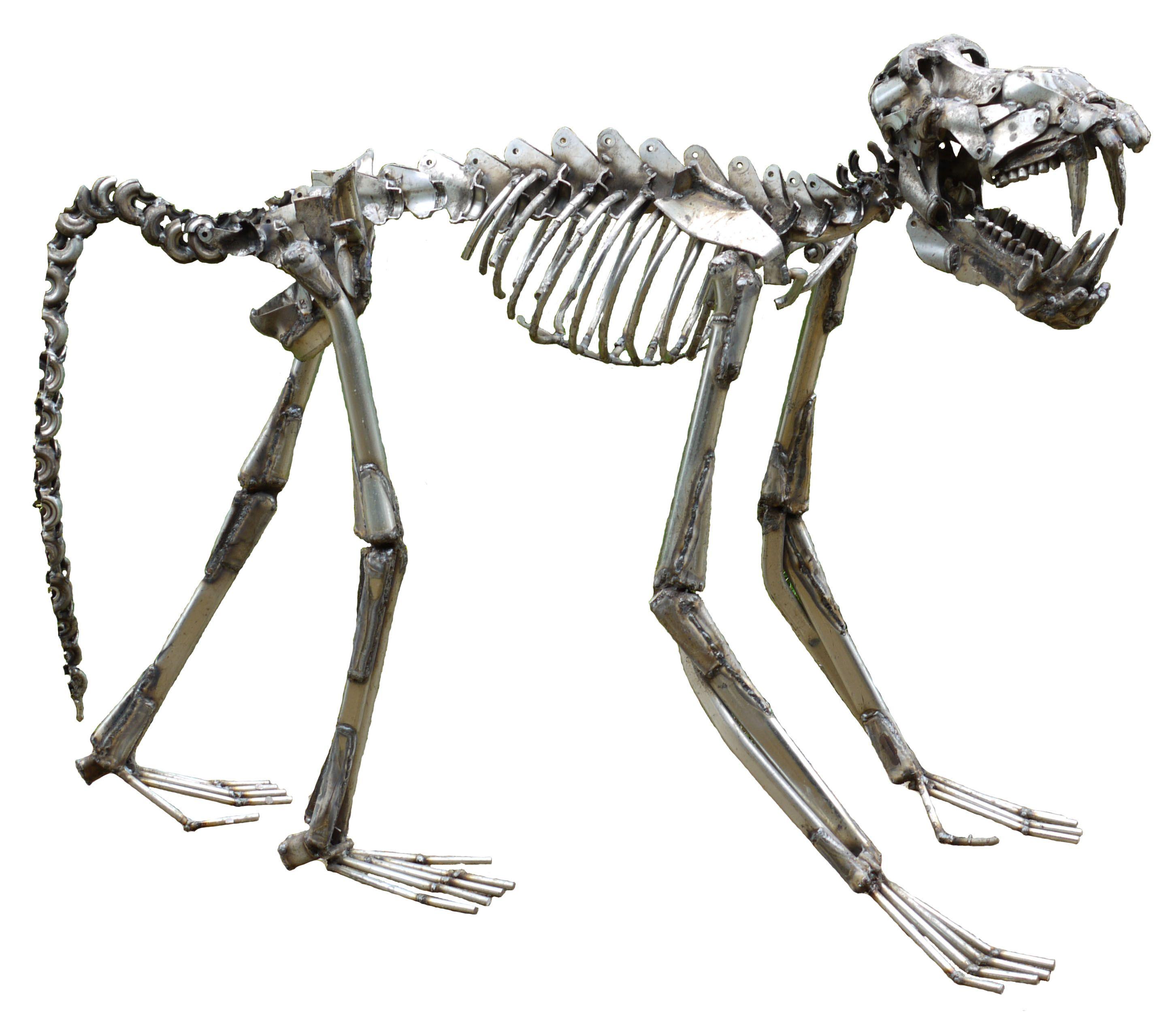 Image result for baboon skeleton | sketch studies | Pinterest