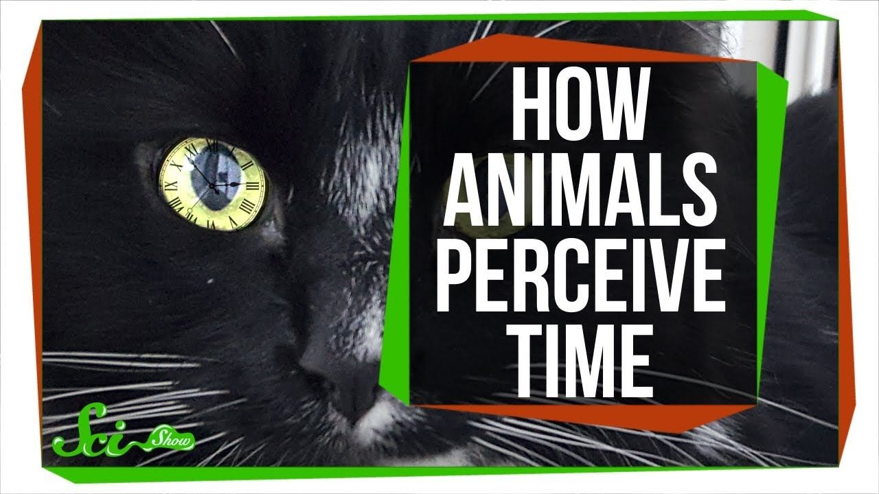 For Some Animals, The World Moves in SlowMotion Animals