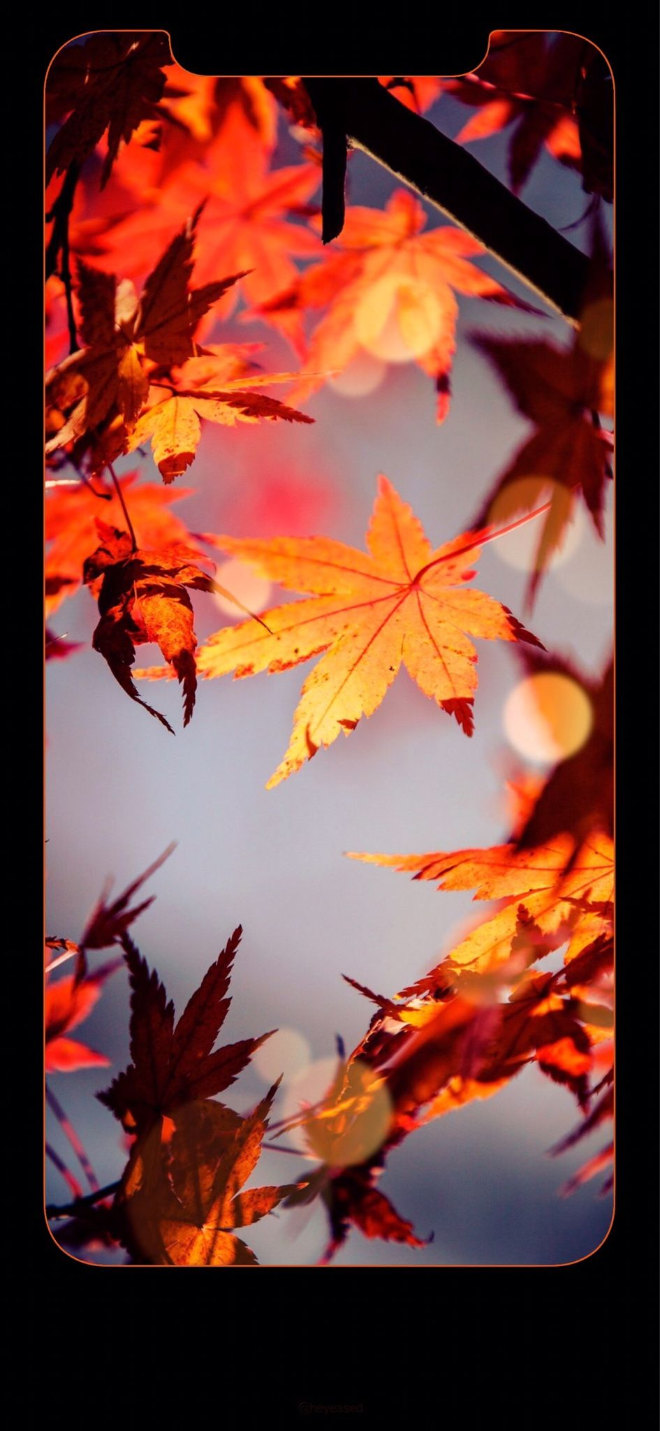 Latest The Most Great Fall Background for iPhone XR