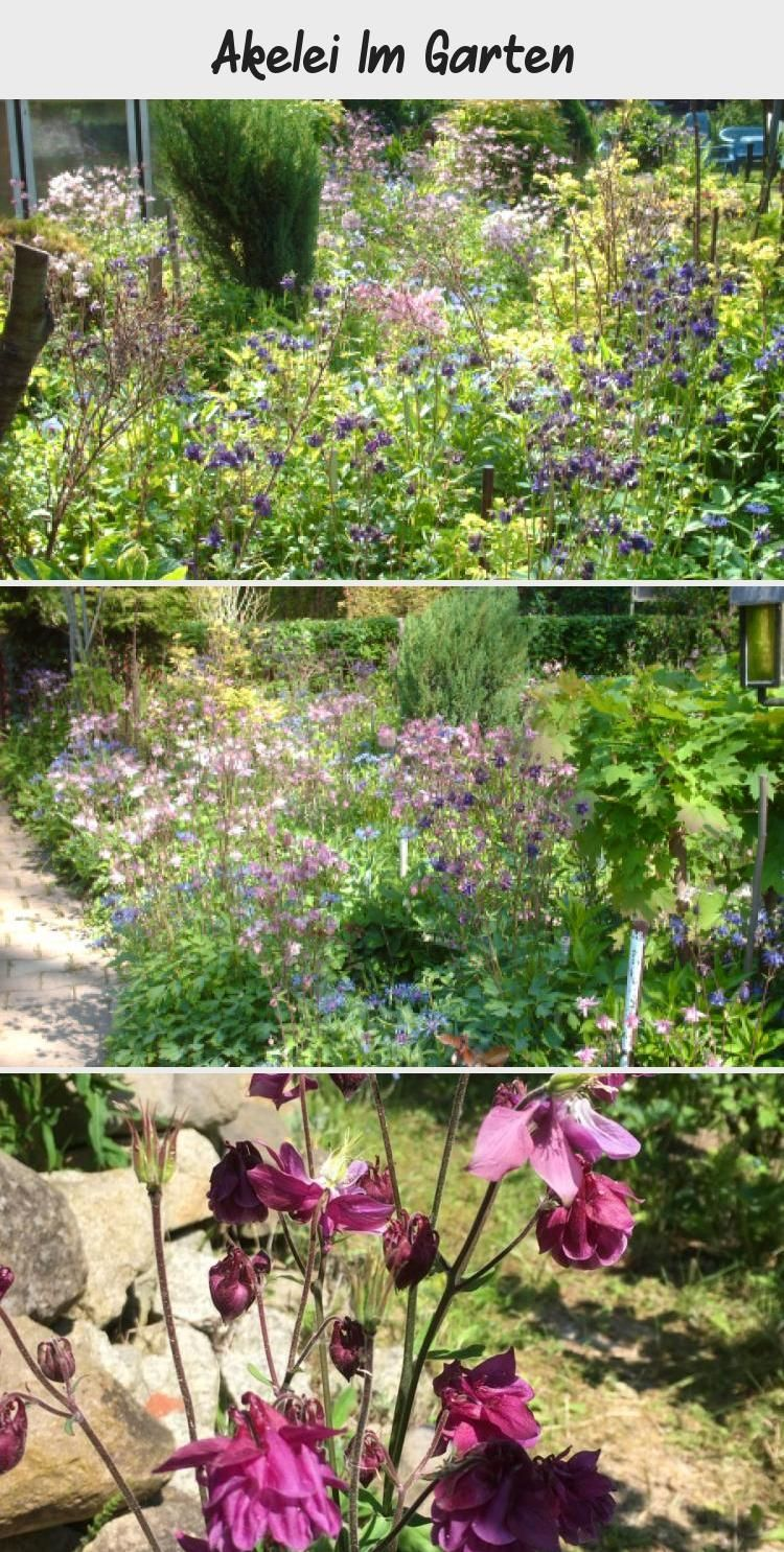 Akelei Im Garten Pinterest Garden Light In The Dark Plants