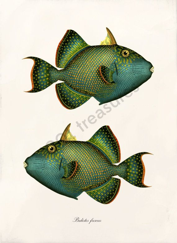 Antique Fish Art Collage Print Natural History door 1001treasures
