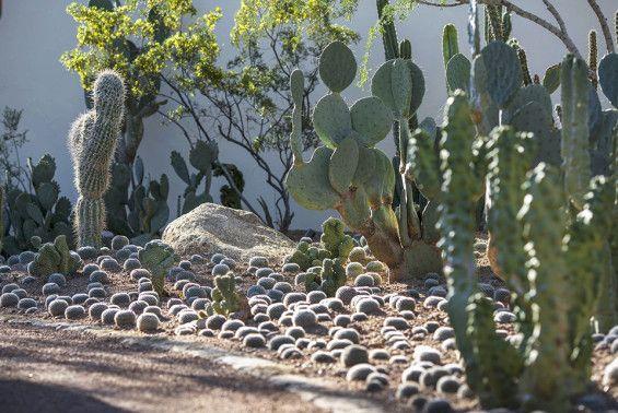 06_House of Desert Gardens_Colwell Shelor